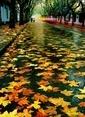 Tablo Center  50cm x 70cm Kanvas Tablo Renkli